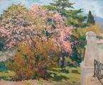 Персик и айва у памятника Марии Федоровны. Ялта.